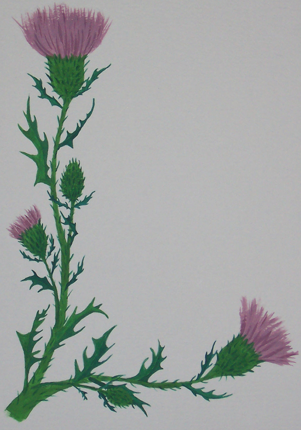 scottish thistle scroll blank
